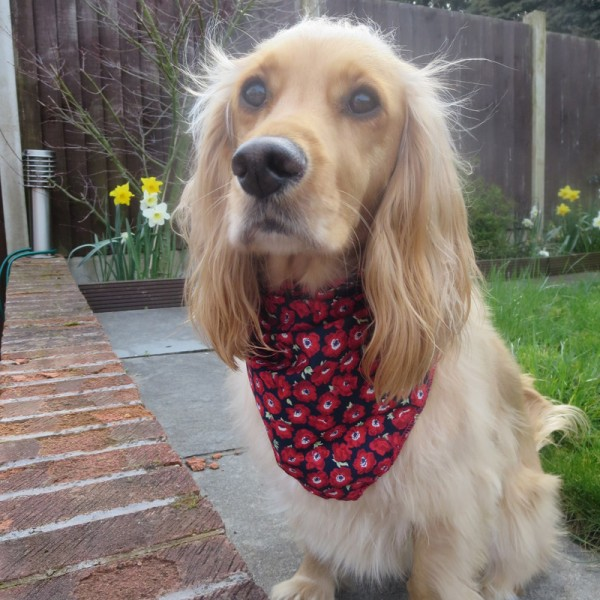 Christmas Bandanas For Dogs