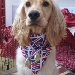 Spaniel wins Olympic Gold