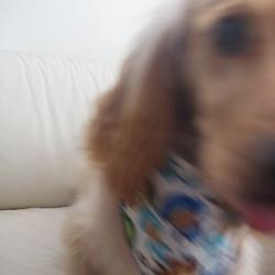 Puppy Bandana Bloopers