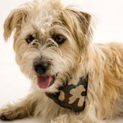 Army Style Dog Bandana