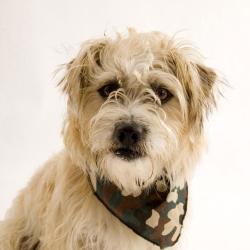 Tie on Camouflage Dog Bandanas