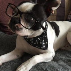 Dexter looking smart and intellectual