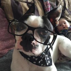Smart boy Dexter