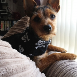 Skull and Crossbones Bandanas for Dogs