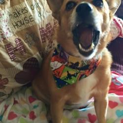 Monty's howling good Halloween