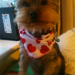 Valentines Day Dog Bandanas