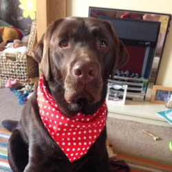 Alfie wears Red Spotty Hanky