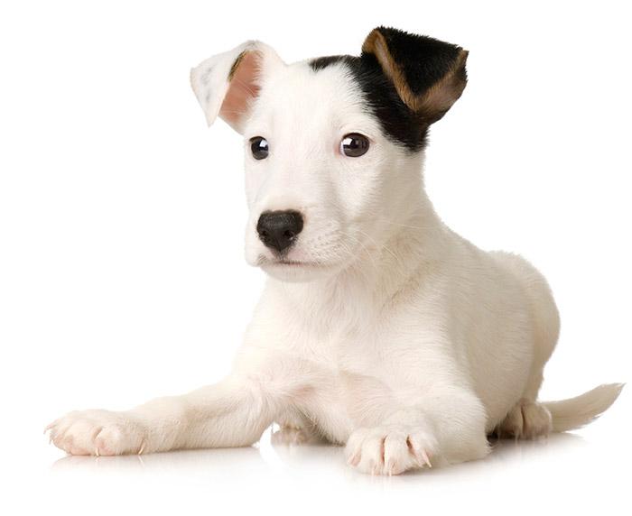 FAQ Puppy