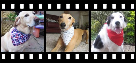Dog Bandana Photo Gallery