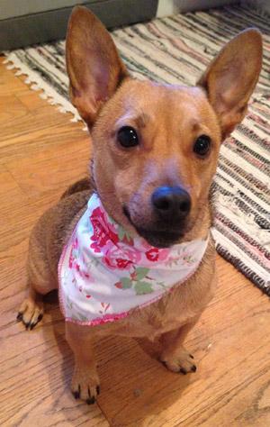 cath kidston style dog bandana