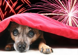dogs-scared-of-fireworks