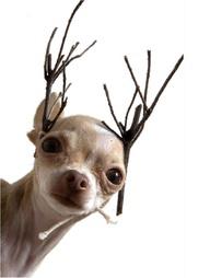 extra-small-dog-bandanas-uk