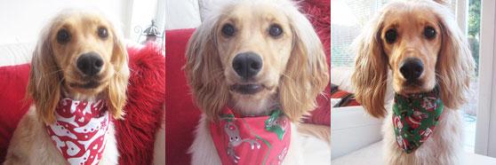 Pack of three christmas dog bandanas