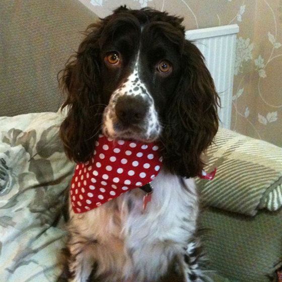 Marcie in red spotty hanky dog bandana