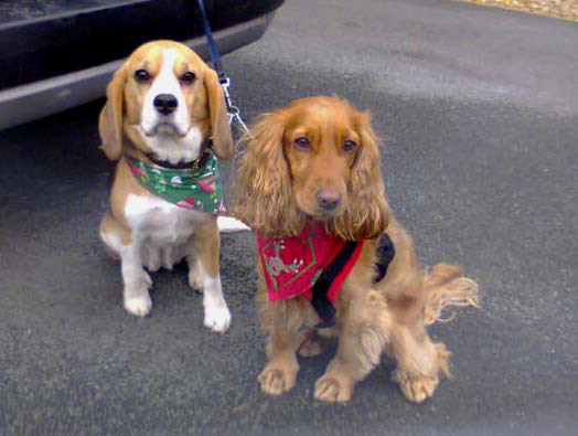 Bailey and Ellie in the Puppy Bandana Photo Gallery