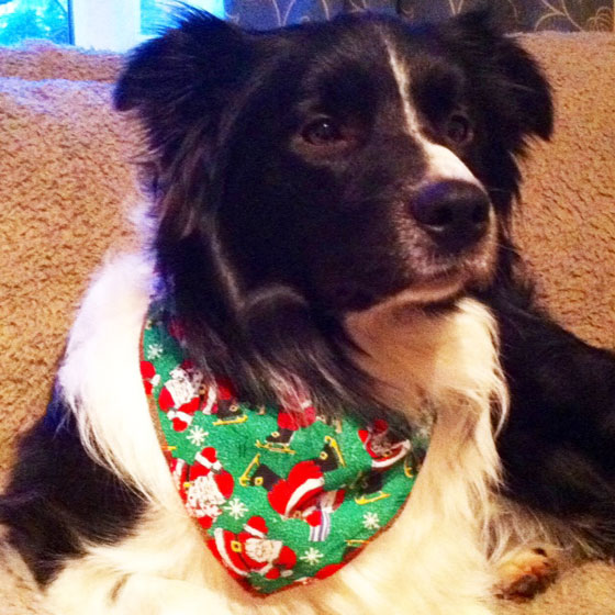 Jake in Santa on Skates dog bandana