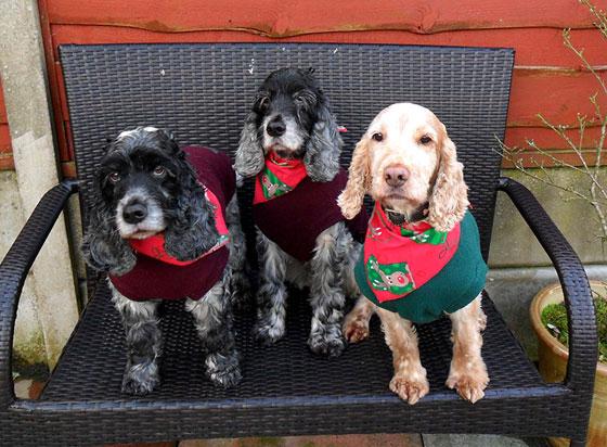 dogs wearing christmas dog bandanas