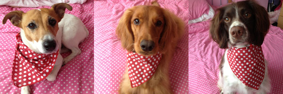 Red Spotty Hanky Dog Bandanas from Puppy Bandana