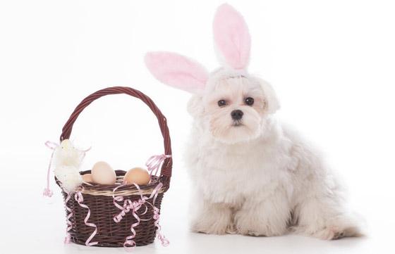 Easter Dog Bandana Designs