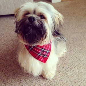 Tartan Dog Bandana from Puppy Bandana