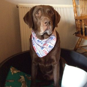 Beach Huts and Bunting Dog Bandana