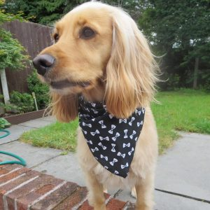 Black Bow Tie Dog Bandana