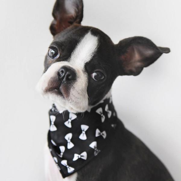 Black Bow Tie Dog Bandana