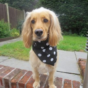 Black and White Polka Dot Dog Bandana