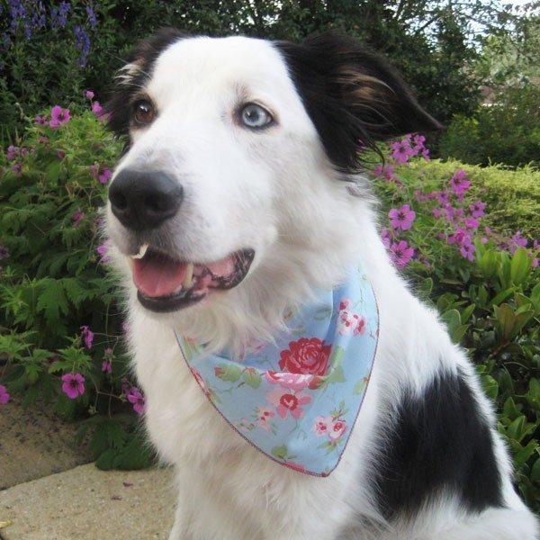 Blue Vintage Rose Dog Bandana