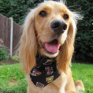Black Campervans Dog Bandana