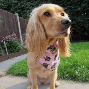 Pink Campervans Dog Bandana