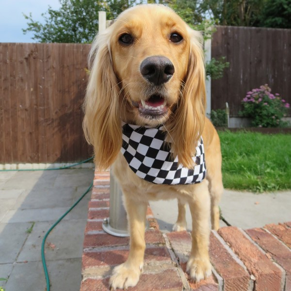 Chequered Flag Dog Bandana