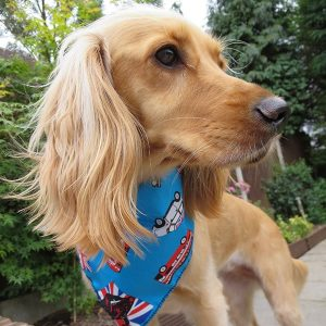 Cool Britannia Dog Bandana