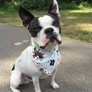 Cowboys Dog Bandana