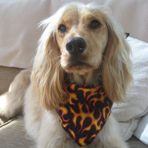 Flames Dog Bandana