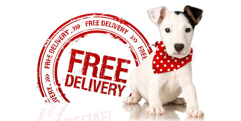 Dog Bandana Delivery Information