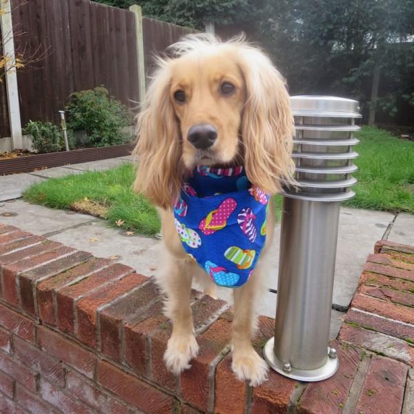 Funky Flip Flops Dog Bandana