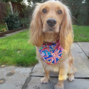 Funky Union Jack Dog Bandana