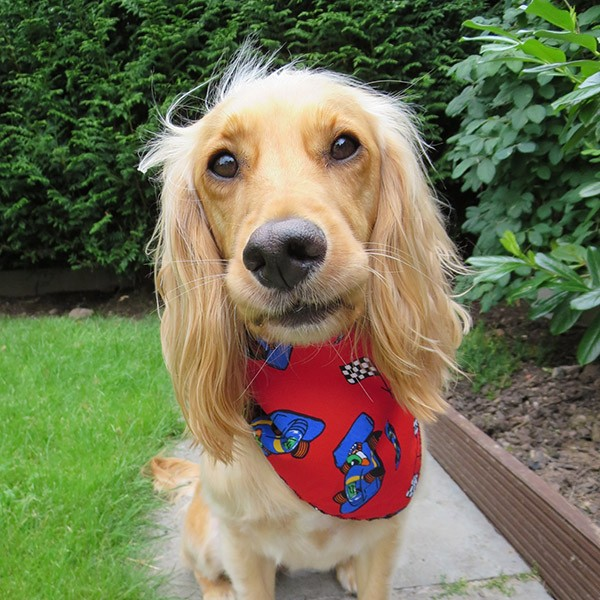 Grand Prix Dog Bandana