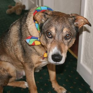 Harlequin Dog Bandana