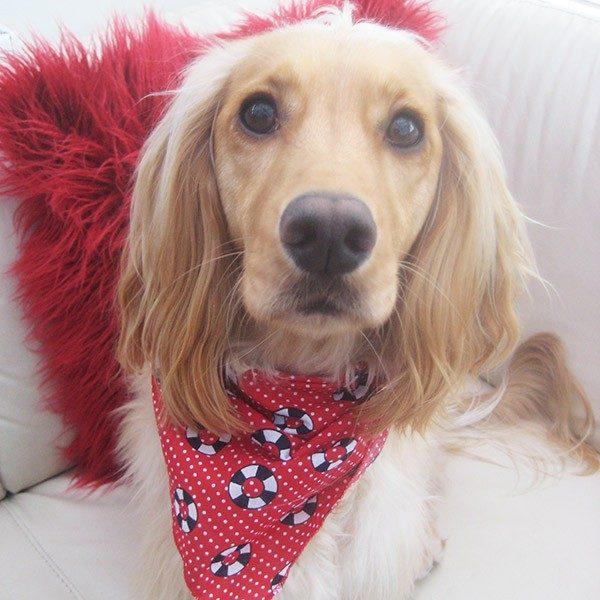 Hello Sailor Dog Bandana