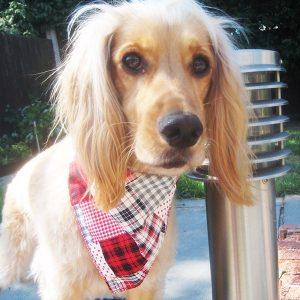 Highland Fling Dog Bandana
