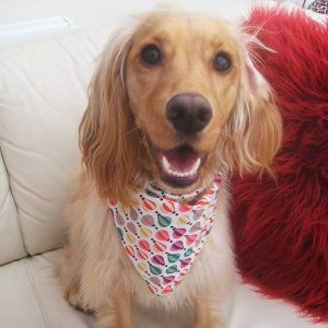Hot Air Balloon Dog Bandana