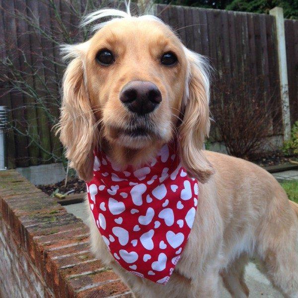 Valentines Day Dog Bandana