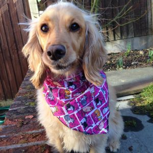 Kitty Cat Pink Dog Bandana