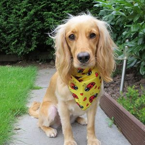 Ladybird Lovebugs Dog Bandana in Yellow