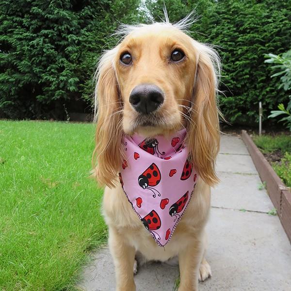 LLadybird Lovebugs Dog Bandana in Pink