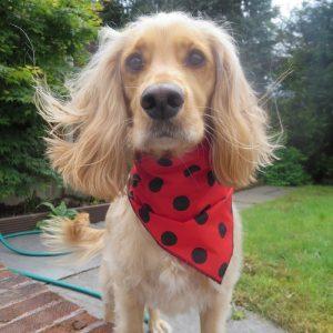 Ladybird Dog Bandana