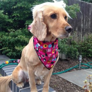 Hot Pink Liquorice Allsorts Dog Bandana