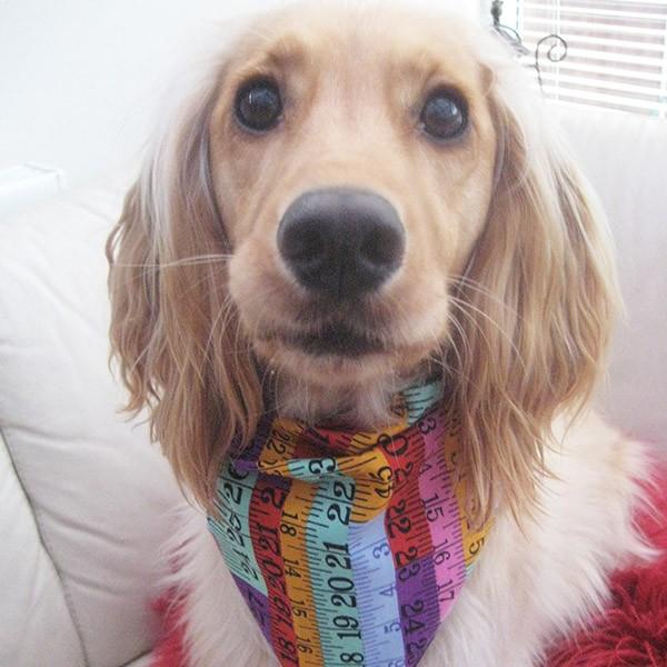 Made to measure dog bandana